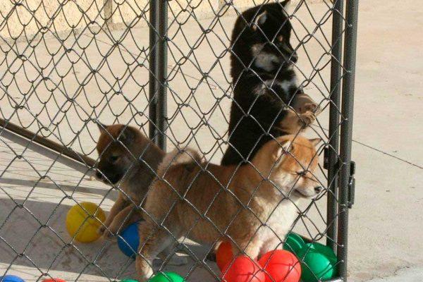 instalaciones-cachorros-exterior-2-kensha