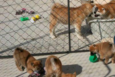 instalaciones-cachorros-exterior-kensha
