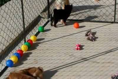 instalaciones-exterior-cachorros-kensha
