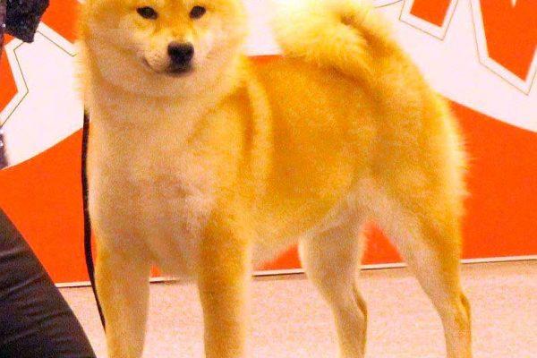 kouhei-2-shiba-kensha