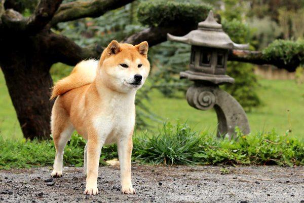 ryuu-shiba-kensha